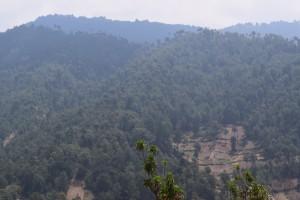 5 Forest, Chirij Raxon, Nahuala